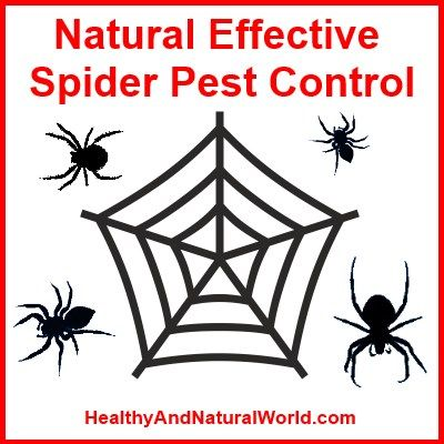 Natural Spider Spray Without Harmful Chemicals...other recipes but note...tobacco is poisonous to dogs.