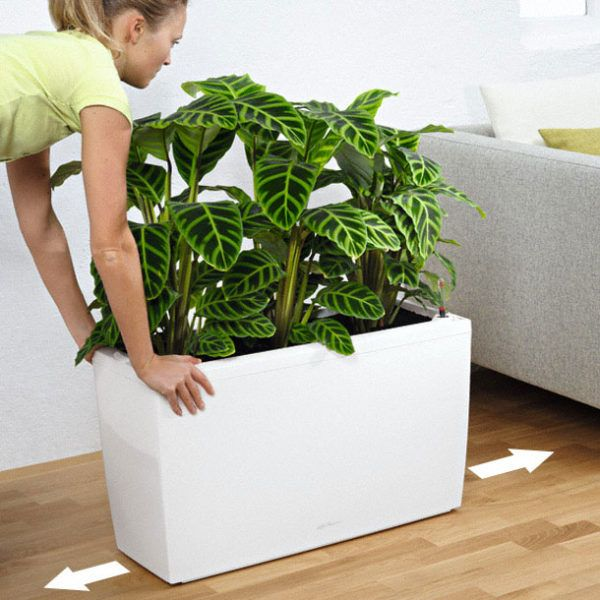 The CARARO Premium creates structure in large rooms. It is perfect as a room divider or classic planter. If you like changing things around, then you'll love the freedom you have with the hidden rollers that come with CARARO. This stylish planter does not only look good but it has a unique sub-irrigation system. This system takes care of your plants for you for up to 12 weeks, ensuring that they receive the right amount of water and nutrients they need for optimum growth.