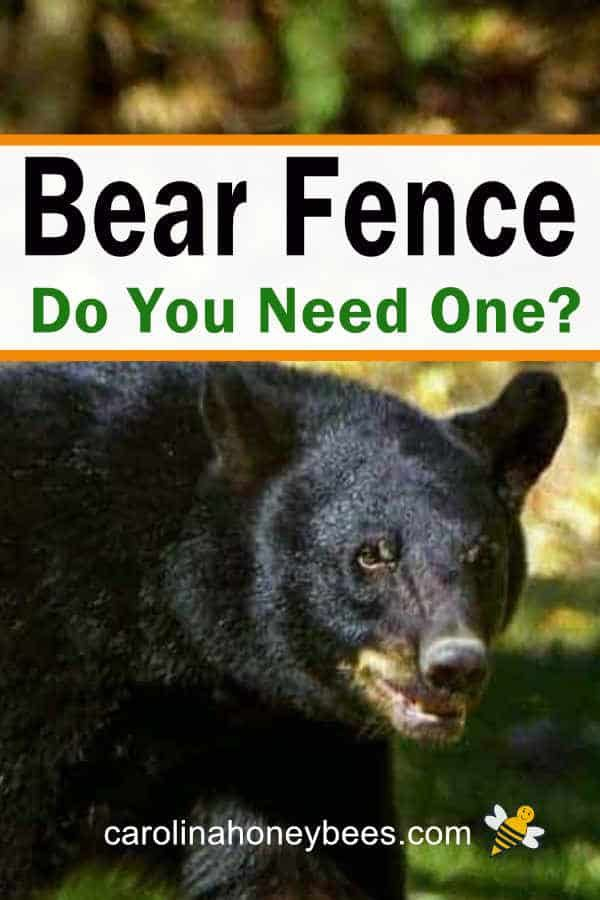 Using Electric Fences For Bears To Protect Your Bees