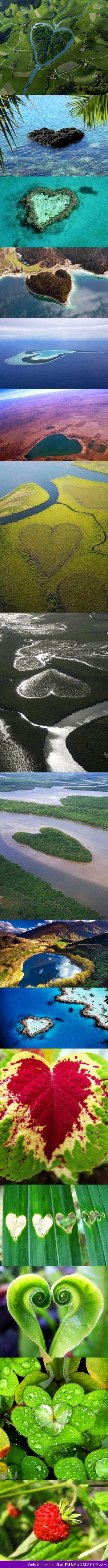 Heart shapes in nature - FunSubstance.com
