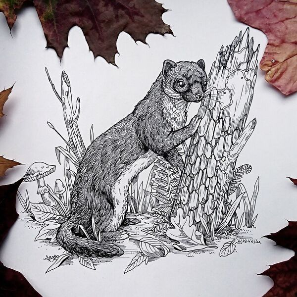 Weasel ink illustration with autumn leaves by W.Kolinska