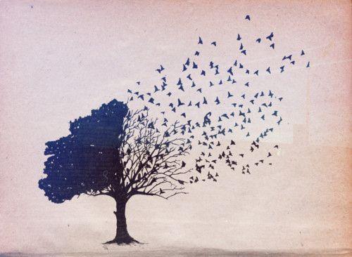 tree bird illustration