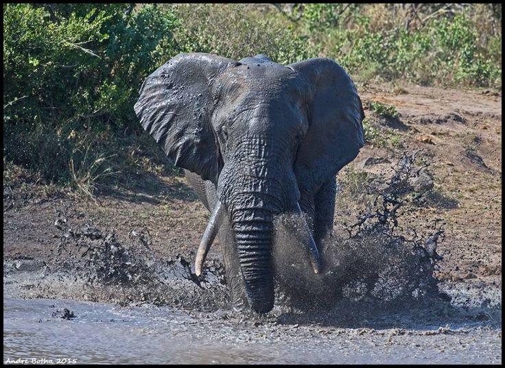 Big boy making a splash at Kumana Dam.