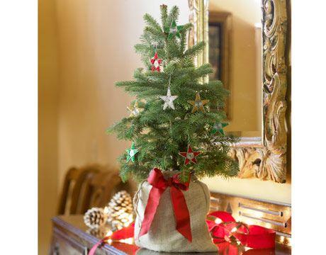 charlie brown christmas - Christmas Tree For Me