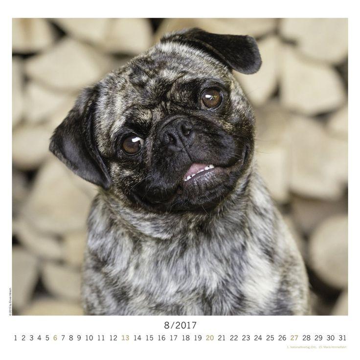 Der Mops 2017 - Das Orginal von Knesebeck, Hundekalender 2017, Tierkalender 2017, Posterkalender 2017, Wandkalender 2017 - 30 x 30 cm: Amazon.de: teNeues Calendars & Stationery, Enver Hirsch: Bücher