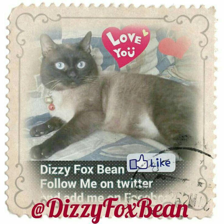 Dizzy Fox Bean