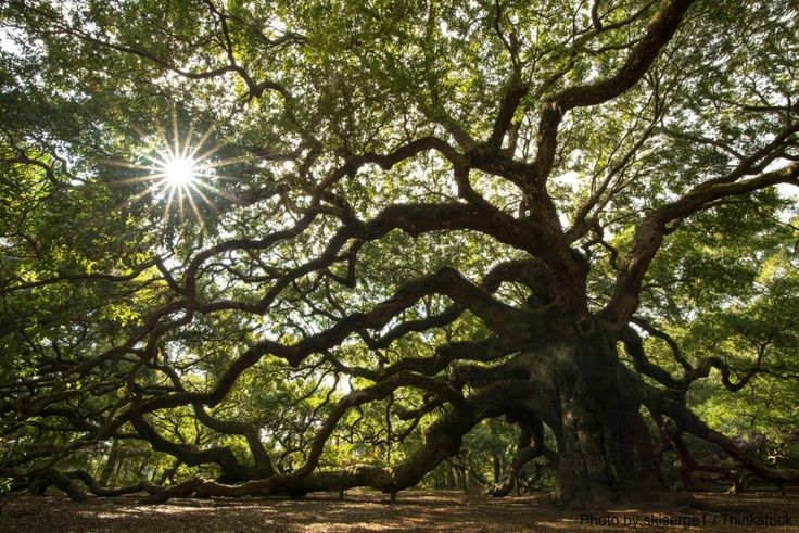 Find Some of the Best Places for Sightseeing in Charleston, SC | Drew Sineath and Associates