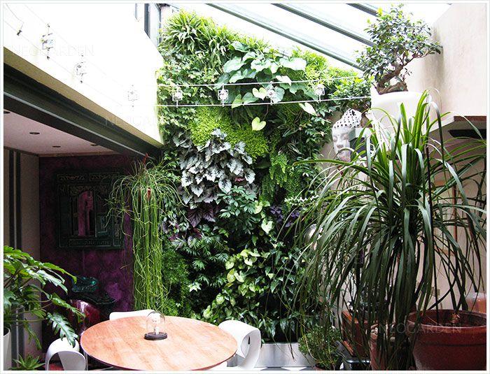 Un Mur végétal à la maison. Green wall, vertical garden, вертикальный сад, зеленая стена