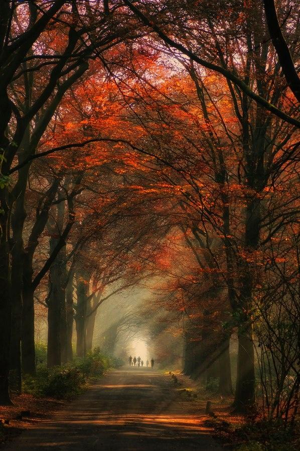 Fall stroll by Robert Broeke