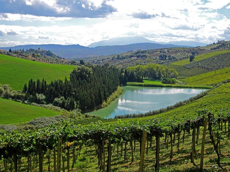 The Nicodemi's vineyards and Notaresco's hills