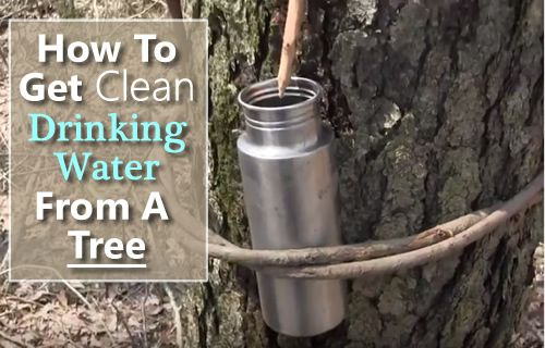 How To Tap Drinking Water From A Tree - all you need is a knife & a container... its clean NO need to filter it... #shtf #survival #wilderness