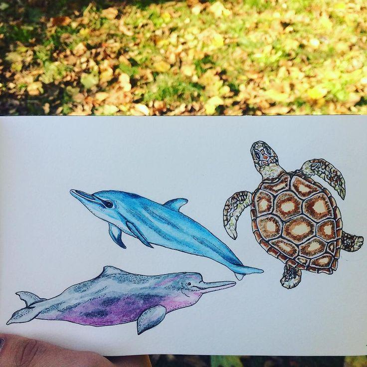 Морские обитатели продолжение к киту. Можно заказать у меня этот набор из 4х штучек в виде фигурных стикеров в красивой упаковке. #instaart#talentedpeopleinc#art_markers#topcreator#illustrator#illustration#иллюстрация#стикеры#акварель#watercolor#art#aquarelle#autumn#дельфины#черепаха#draw#drawing#drawingaday#рисую#рисуйкаждыйдень#линер#графика by rozavitta