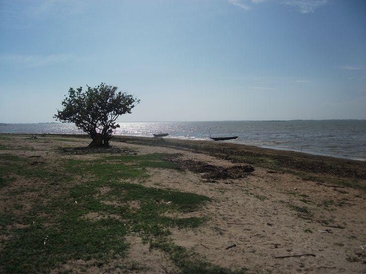 Playón que se forma a raíz del fuerte verano a la orilla de la Ciénaga de Zapatosa en la Vereda Garzón, del Corregimiento de Botillero, del municipio de El Banco, Magdalena, Colombia