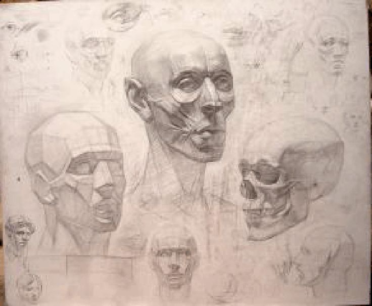 81 best Head Construction images on Pinterest | Anatomy drawing ...
