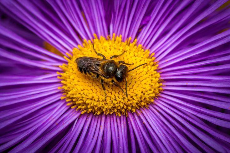 Bee by Mirza Buljusmic