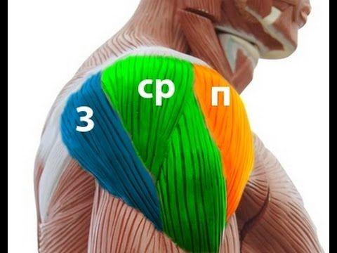 Как вылечить плечо