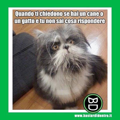 Sembra una domanda facile ma prova a rispondere! Tagga i tuoi amici e #condividi #bastardidentro #gatto #cane www.bastardidentro.it