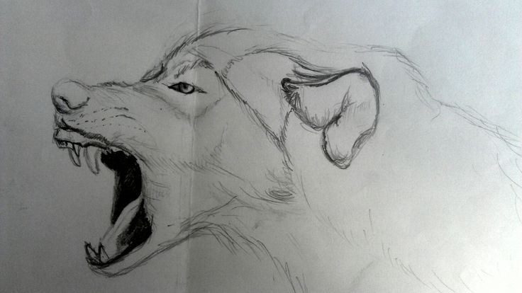 Draw wolf angry