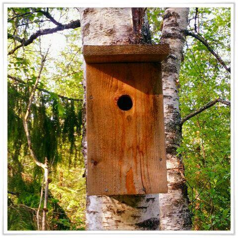 Mitt liv som Toril :o): Fuglekasse 2015 #6