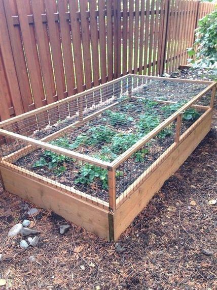 #vegetablegardening
