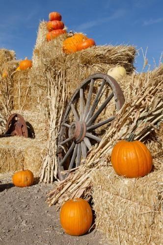 7815 Autumn Pumpkin Patch - Backdrop Outlet