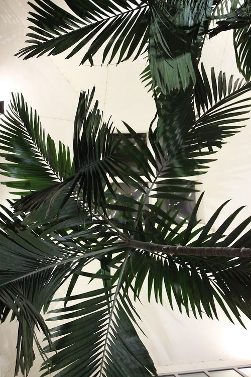 I have always had a strange obsession with palm trees, I think it is because to me they represent warm weather. From a girl who has lived in Boston her whole life's perspective, warm weather is the best thing since sliced bread! Whenever I see palm trees it just makes me happy.
