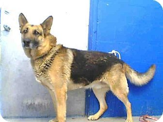 URG'T ~~ Los Angeles County Lancaster VOLUNTEERS  Pet ID #:A4431110  Phone:  (661) 940-4191   E-mail:  Please call this shelter!  (They don't list their email address here)  Website:  http://animalcare.lacounty.gov  Address:5210 W. Ave. I  Lancaster, CA   93536Email Address