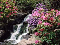 Crystal Springs Rhododendron Garden | admission is $4 during April and May, when the blooms are at their peak