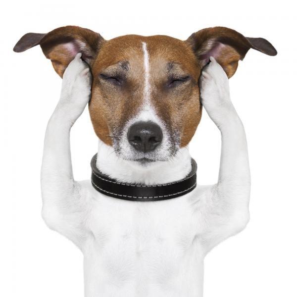 Remédios caseiros para a dor de ouvido em cães. Quando perceber que o seu animal começa a movimentar a cabeça com frequência, soluça a todo o momento e fica inquieto, é possível que esteja com dor de ouvido. É um incômodo muito intenso que os cães ...