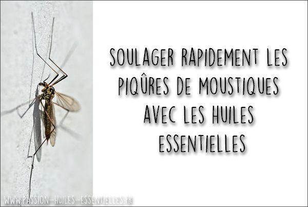 Vous cherchez une recette naturelle pour apaiser les piqûres de moustiques ? Démangeaisons, gonflement, infection, supprimez-les grâce aux huiles essentielles !