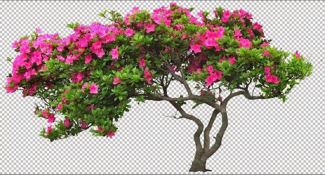 thư viện cây hoa photoshop