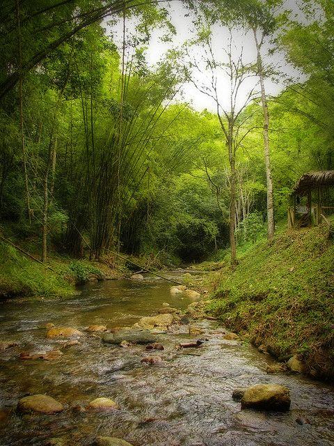 Caura River Valley, Trinidad and Tobago.