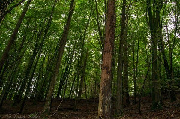 the Trees by Photosbytavo