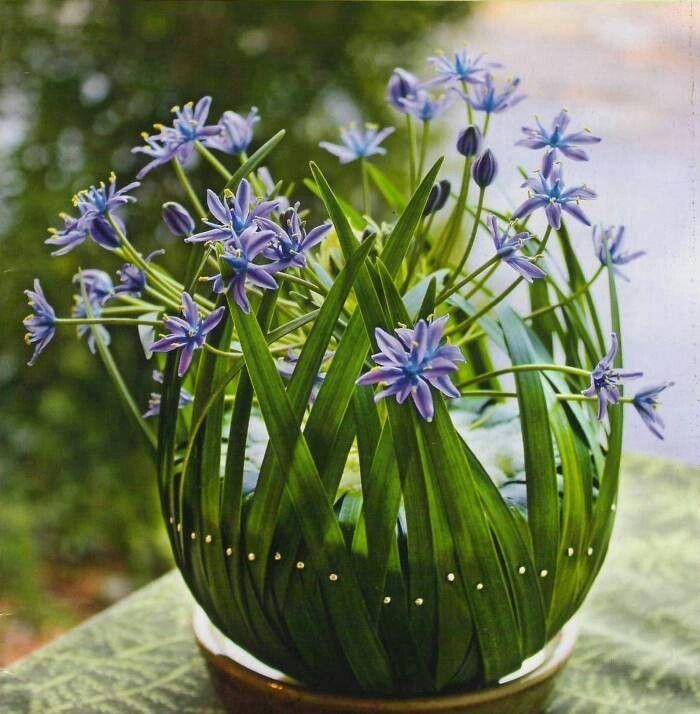 Floral art-bloemstuk bv halve piepschuimbol bekleden met blad of stroken papier, binnenin bloemen of bloembollen met mos