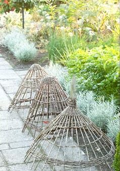 Willow cloches Might have to make these to keep next doors pesky cats off my plants!