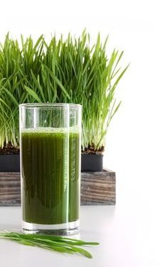 Wheatgrass Treatment For Cancer