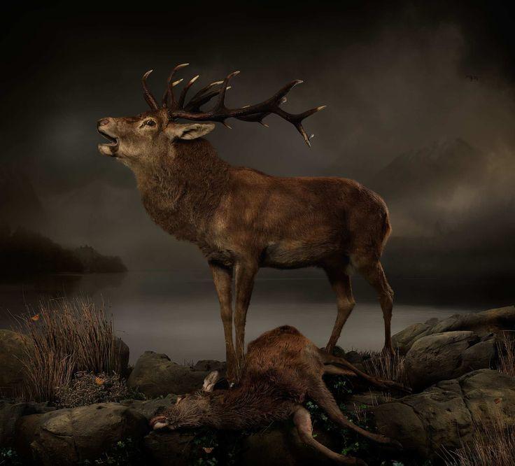 Incredible Animal Photography by Joseph McGlennon #inspiration #photography