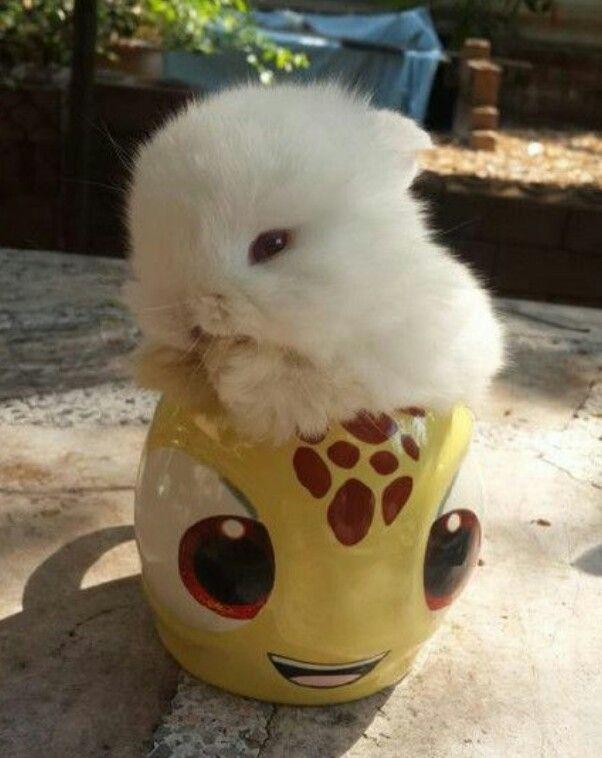 All a bun in a cup