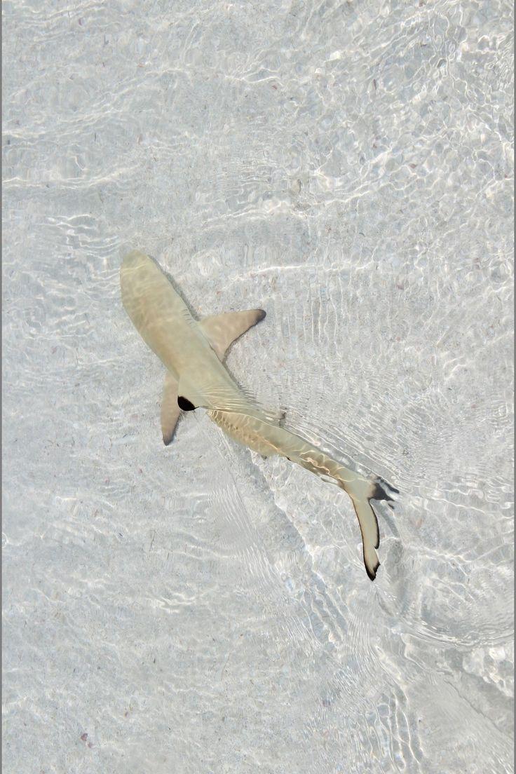 Sharks une collection d 39 id es que vous avez essay es for Shark tank fairy door