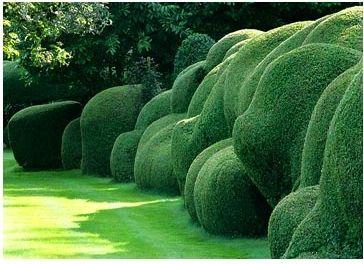 tamsinjohnson:    Hedge love