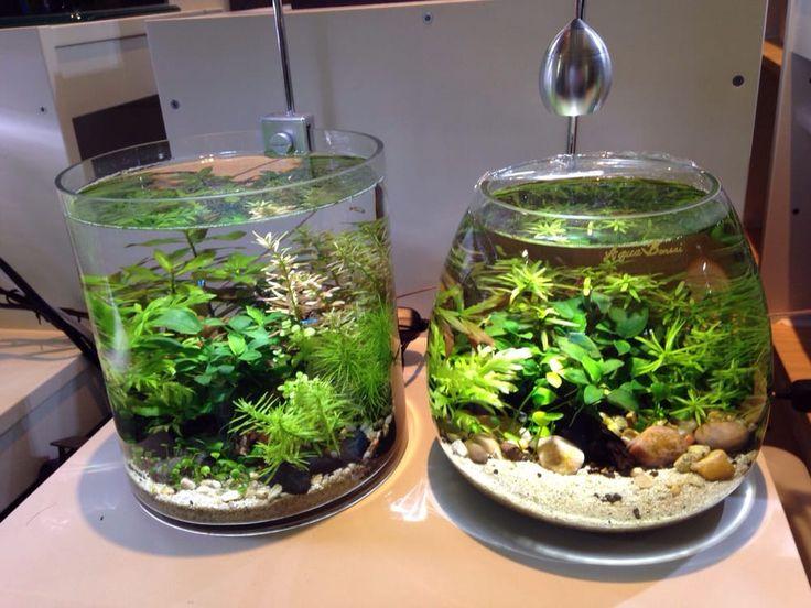 25 Best Ideas About Vase Fish Tank On Pinterest Betta