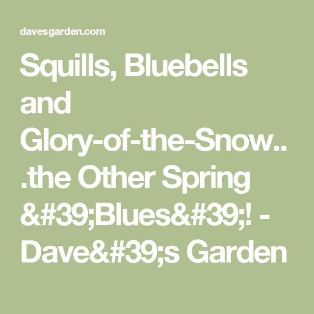 Squills, Bluebells and Glory-of-the-Snow...the Other Spring 'Blues'! - Dave's Garden
