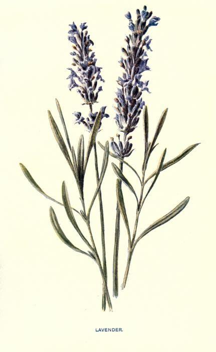 Familiar garden flowers, - Biodiversity Heritage Library