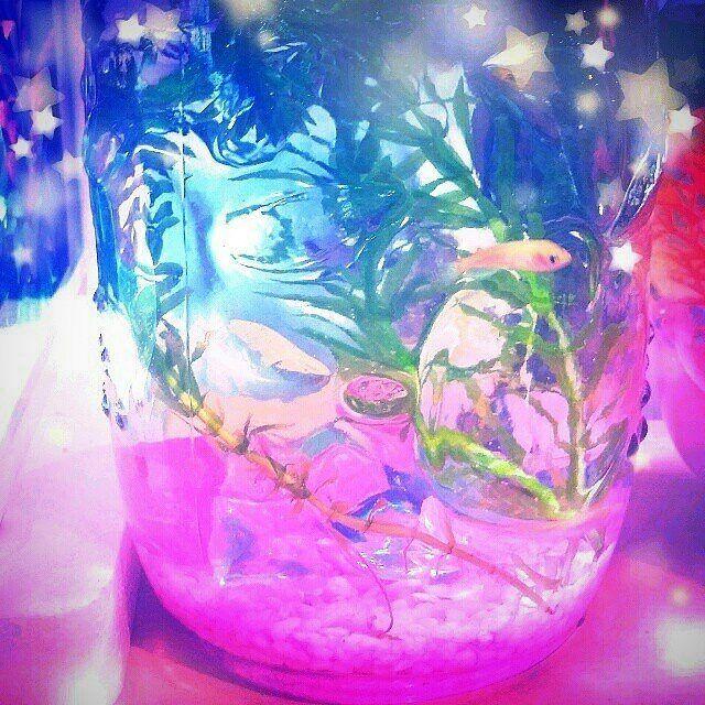 【sayasaya.aqua】さんのInstagramをピンしています。 《めだか水槽 #アクアリウム#aquarium#水槽#熱帯魚#ネオンテトラ#ライアーモーリー#カラフル#colorful#派手水槽#魚#インテリア#ペット#ビン#ビンの水槽#綺麗#お洒落#写真》