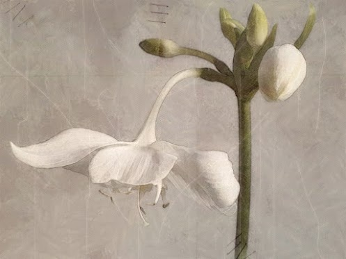 248 best Flower (white) Still Life #2 images on Pinterest | Flower ...