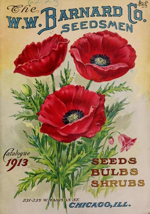 The W.W. Barnard Co. vintage seed packet, 1913.  #poppies