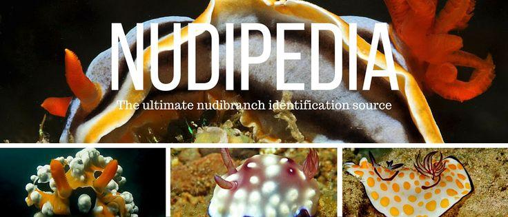 Nudipedia: Nudibranch Species Identification
