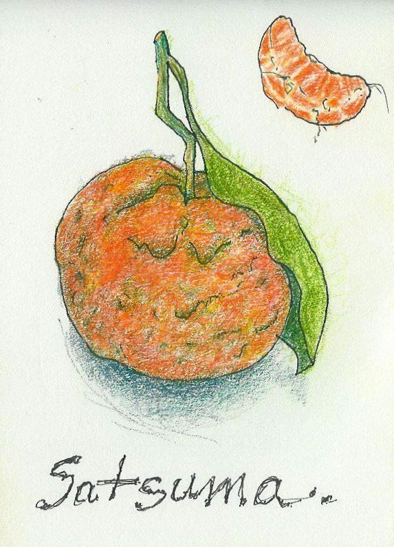 Satsuma - Liz Brown - Colored Pencil and Ink