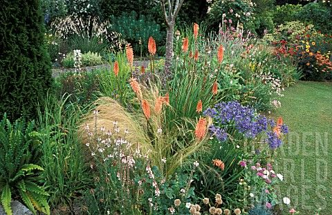 Absolutely love the combination of south african plants: Kniphofia, agapanthus, red hot poker