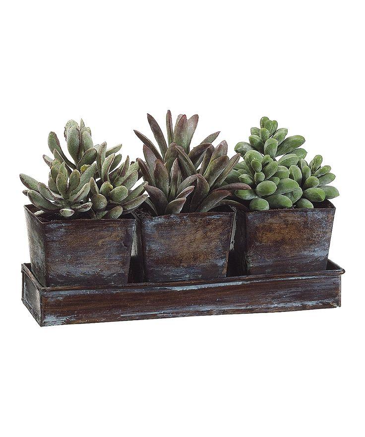 67 best images about feng shui plants on pinterest desk for Best low maintenance potted plants